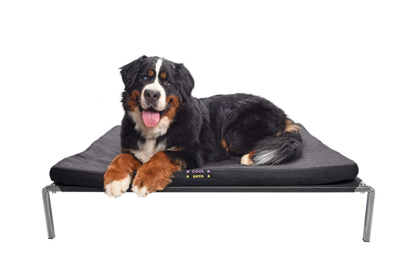patrick-relaxes-on-all-seasons-mattress-for-dogs