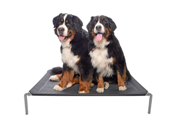 premium-heavy-duty-galvanised-bed-for-extra-large-dogs